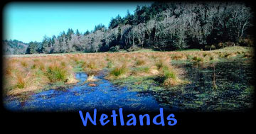 controversies of draining wetlands essay